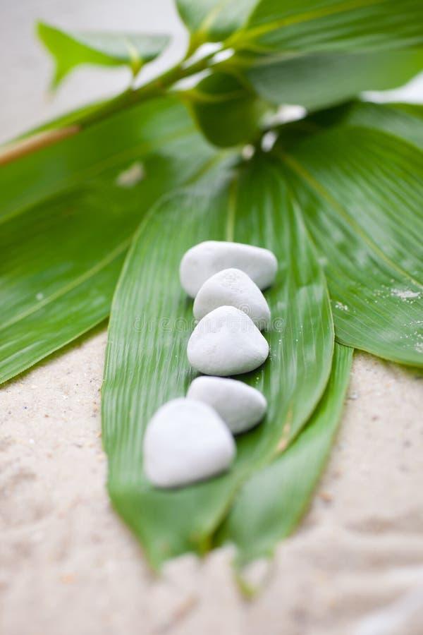 Hojas frescas del bambú con las piedras blancas del balneario fotografía de archivo