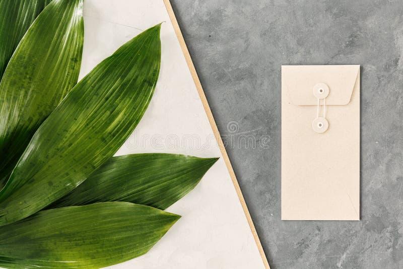 Hojas frescas del verde fotos de archivo libres de regalías