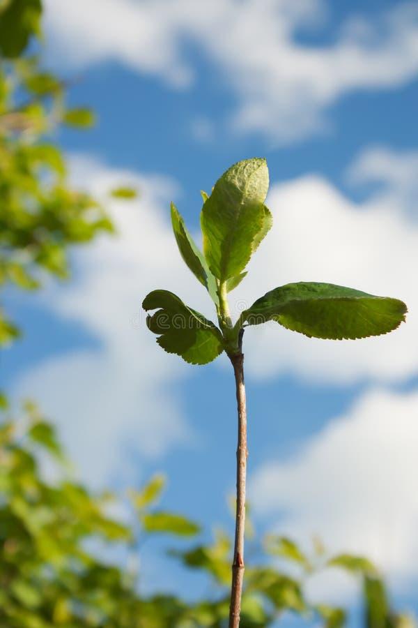 Hojas frescas verdes contra el cielo azul fotos de archivo libres de regalías
