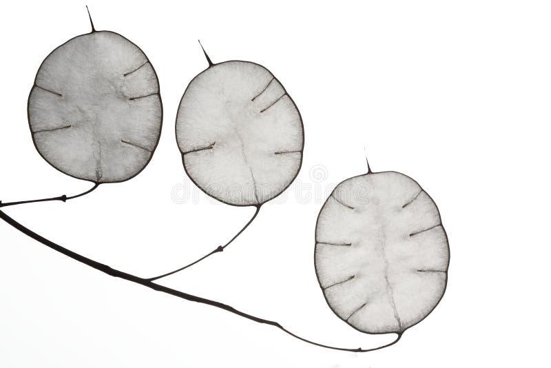 Hojas inusuales con una extremidad en contraluz Textura de las hojas aisladas en el fondo blanco Estilo de Eco, materiales natura imagenes de archivo