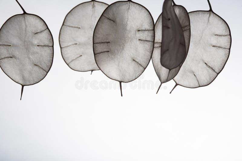 Hojas inusuales con una extremidad en contraluz Textura de las hojas aisladas en el fondo blanco estilo ecológico, natural imagenes de archivo