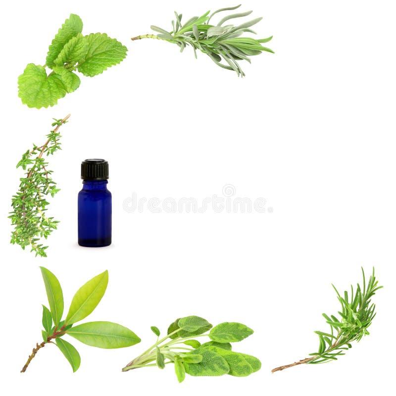 Hojas medicinales y culinarias de la hierba imagenes de archivo