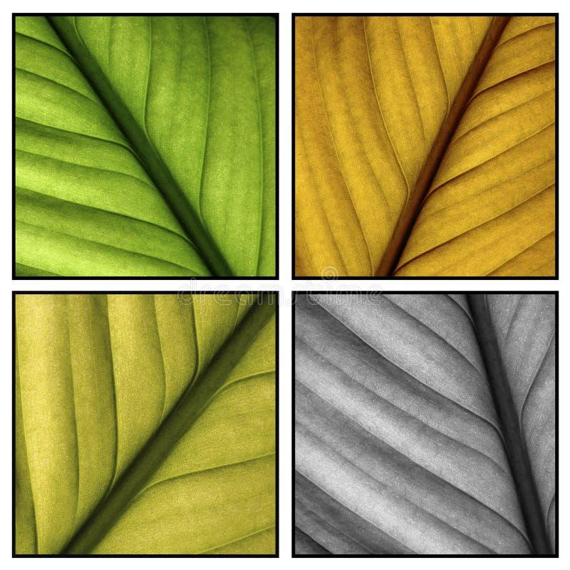 Hojas multi del color fotos de archivo libres de regalías