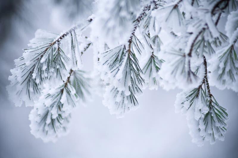 Hojas nevadas en invierno