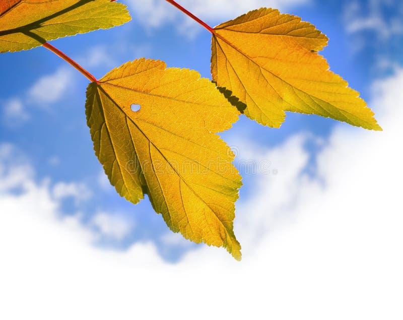 Hojas otoñales amarillas sobre el cielo nublado brillante fotografía de archivo libre de regalías