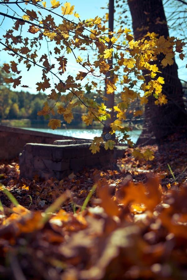 Hojas otoñales caídas en el bosque, follaje fotos de archivo libres de regalías
