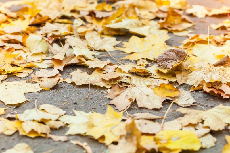 Hojas otoñales caidas amarillo en el camino fotografía de archivo libre de regalías