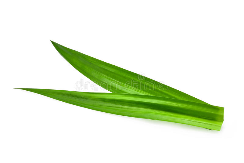 Hojas pandan verdes frescas aisladas en blanco imagen de archivo