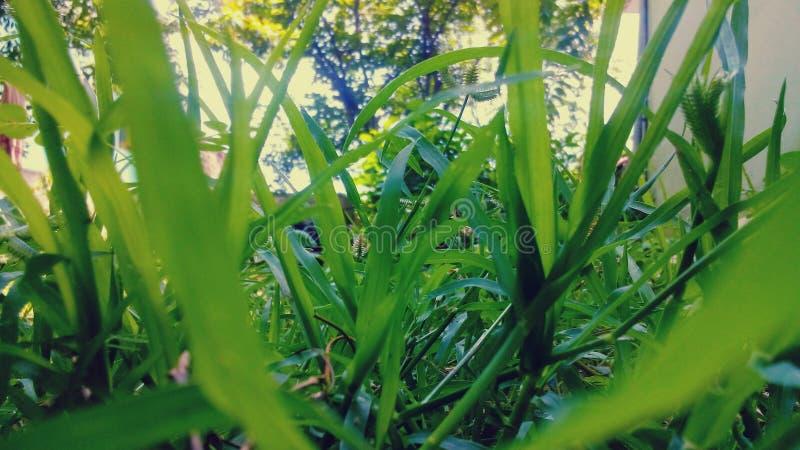 Hojas para el verde fotos de archivo