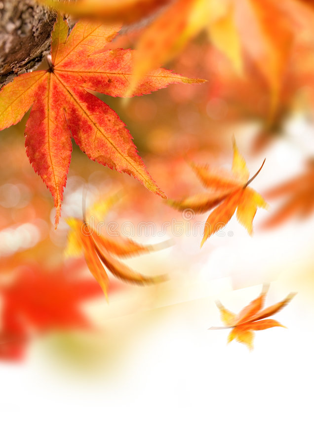 Hojas que caen del otoño fotografía de archivo
