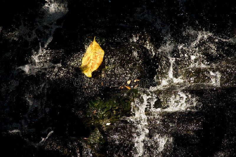 Hojas que caen en la cascada foto de archivo libre de regalías
