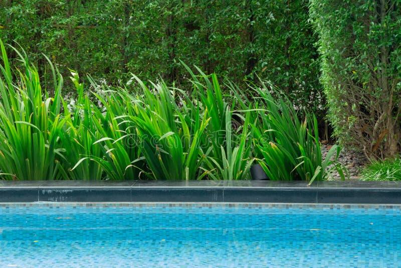 Hojas que flotan en la piscina con una reflexión agradable del árbol apagado en la esquina Él otoño y ese ` s del ` s la estación foto de archivo libre de regalías