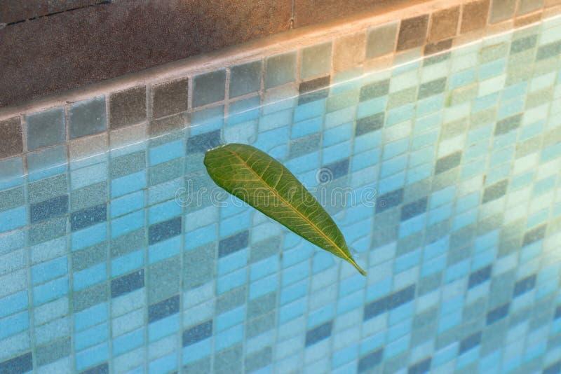 Hojas que flotan en la piscina con una reflexión agradable del árbol apagado en la esquina Él otoño y ese ` s del ` s la estación imagenes de archivo
