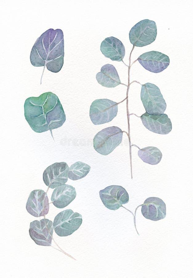 Hojas redondas del eucalipto de la acuarela y ramas florales de la ramita Eucalipto del bebé pintado a mano y del dólar de plata, stock de ilustración