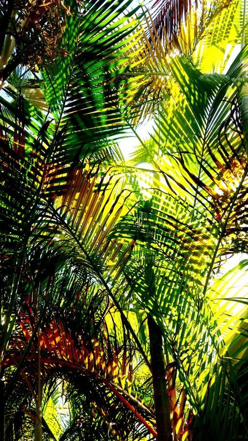 hojas relajantes de la palmera imagen de archivo libre de regalías