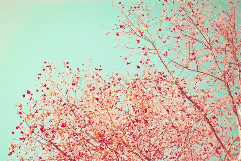 Hojas rojas del otoño fotos de archivo libres de regalías