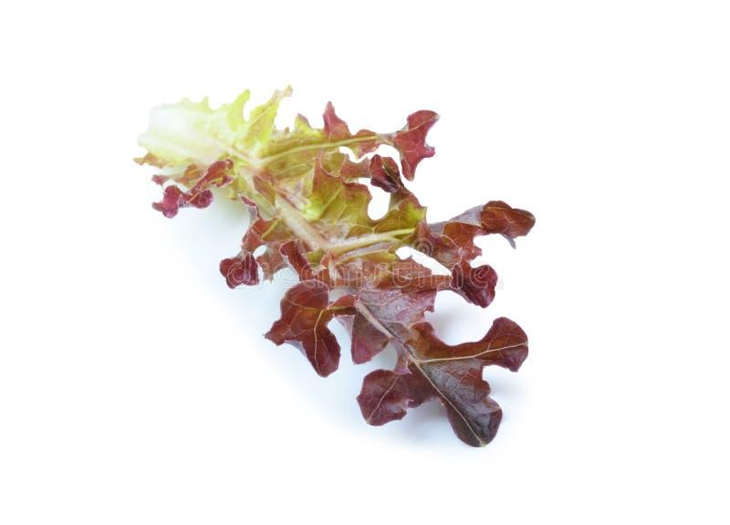 Hojas rojas frescas de la lechuga aisladas en blanco imagen de archivo