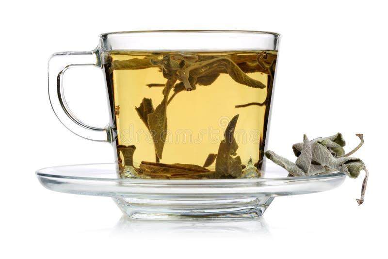 Hojas sabias del té y del sabio foto de archivo
