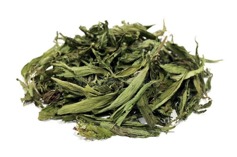 Hojas secadas del Stevia imagen de archivo