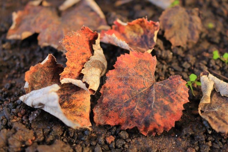 Hojas secadas en la tierra Fondo ?til Estación del otoño a la vuelta de la esquina imagenes de archivo