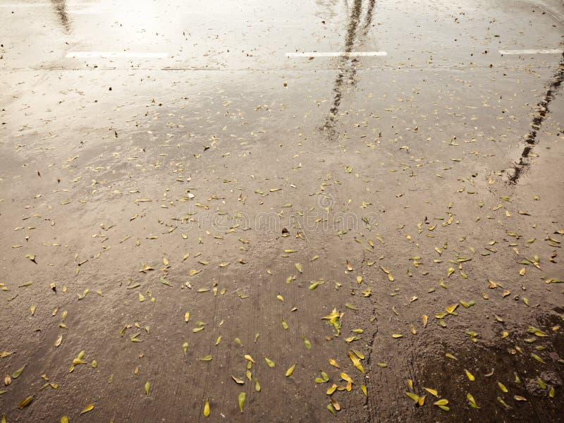 Hojas secas abstractas en piso concreto después de temporales de lluvia fotos de archivo libres de regalías