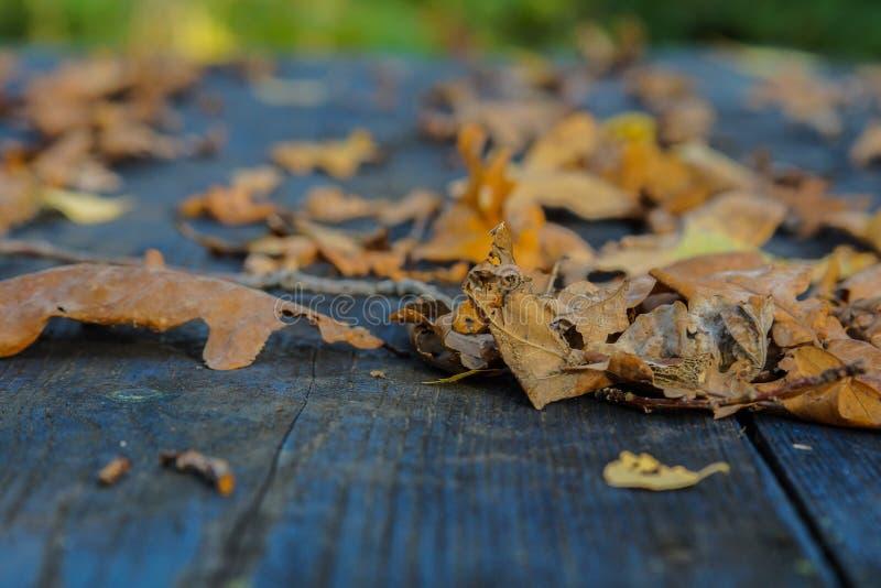 hojas secas del otoño en una macro de la tabla fotografía de archivo libre de regalías