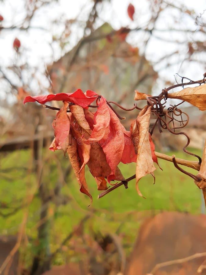 Hojas secas en parque del otoño imagen de archivo libre de regalías