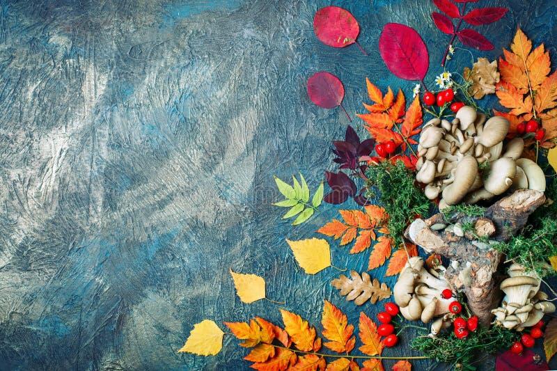 Hojas, setas y bayas de otoño en un fondo oscuro Fondo del otoño con el espacio de la copia imagen de archivo libre de regalías