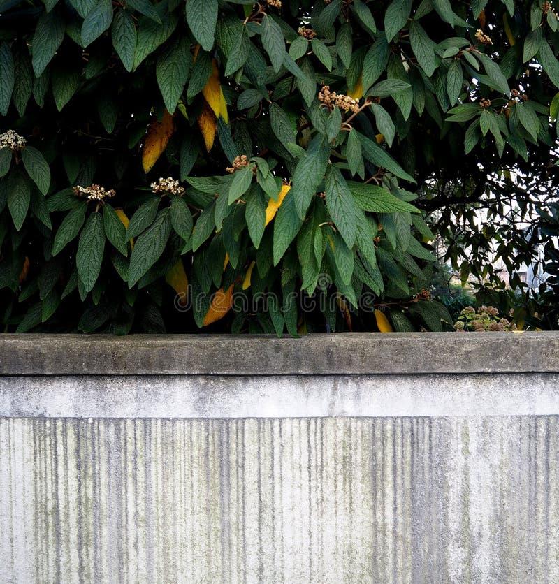 Hojas sobre la fachada blanca foto de archivo libre de regalías