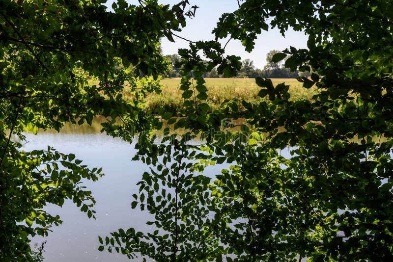 Hojas a través vistas Saale del río foto de archivo