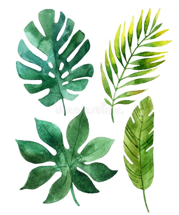 Hojas tropicales ilustración del vector
