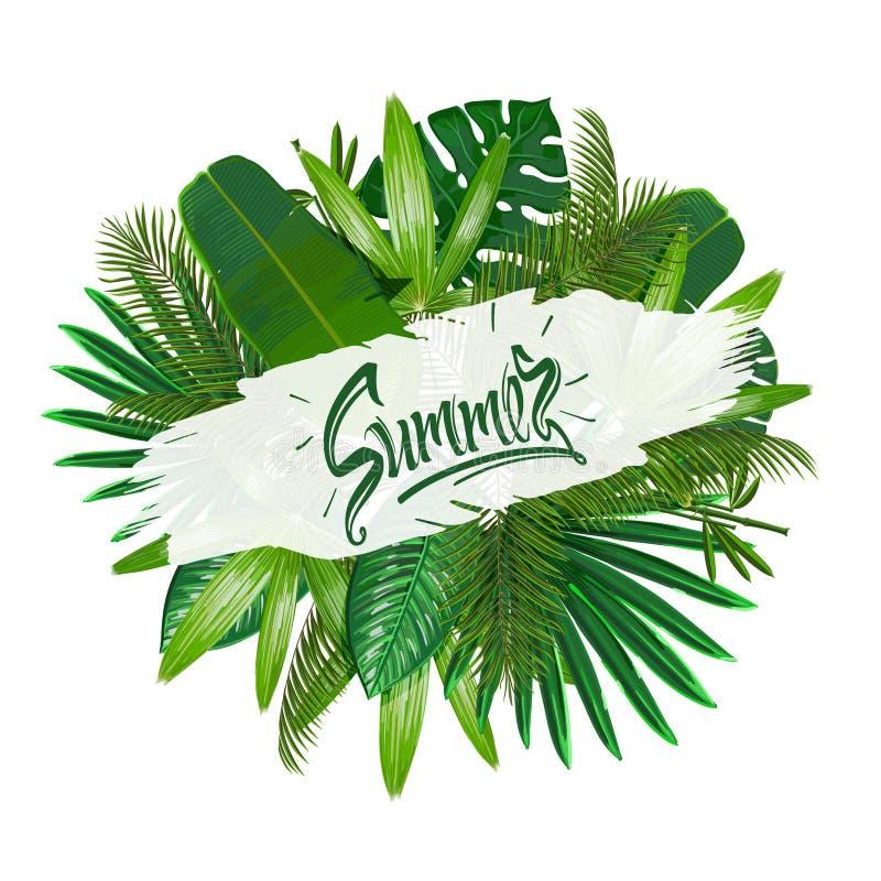 Hojas tropicales alrededor del verano de la muestra en el fondo blanco Naturaleza del modelo imagen de archivo