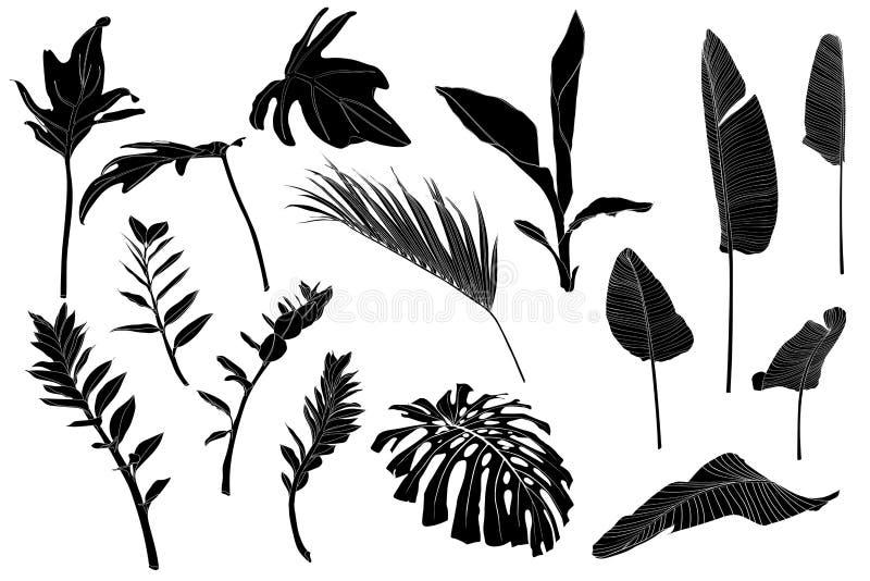 Hojas tropicales blancas negras fijadas Palma exótica de la hoja de la selva monocromática, helecho real, hoja del plátano libre illustration