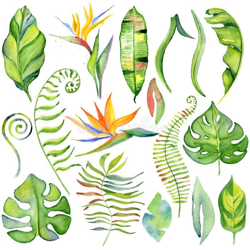 Hojas tropicales de la acuarela ilustración del vector