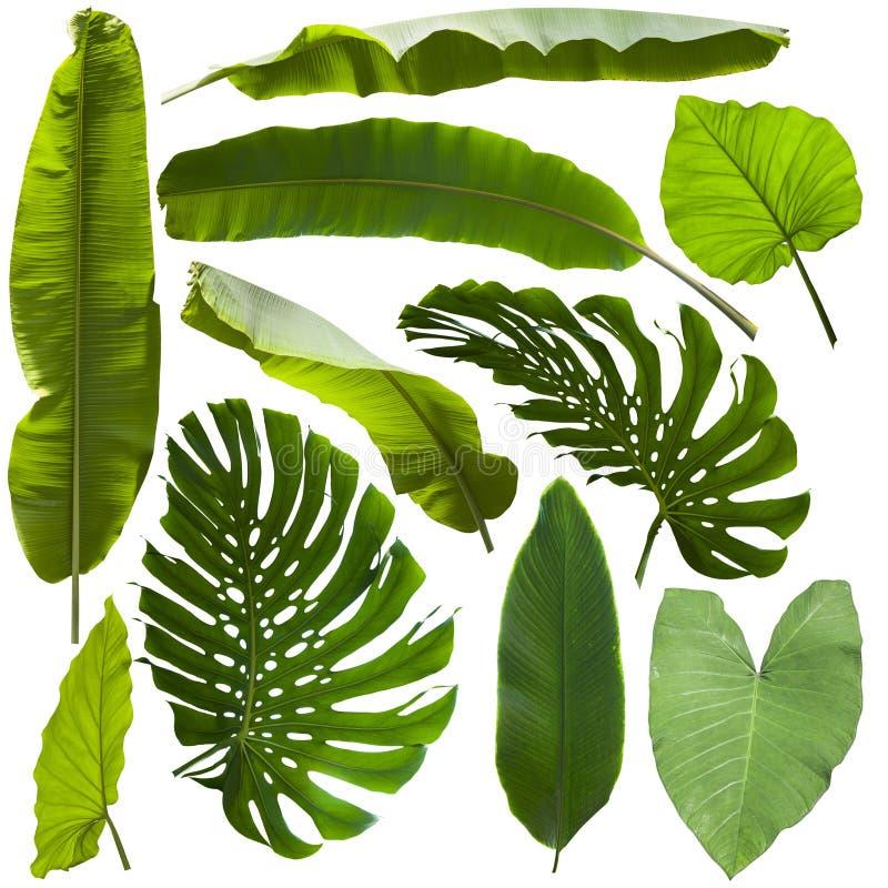Hojas tropicales de la selva foto de archivo libre de regalías