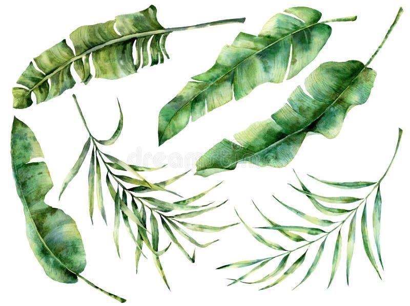Hojas tropicales del árbol de la acuarela fijadas Rama exótica pintada a mano del verdor del plátano y del coco en fondo azul mar stock de ilustración