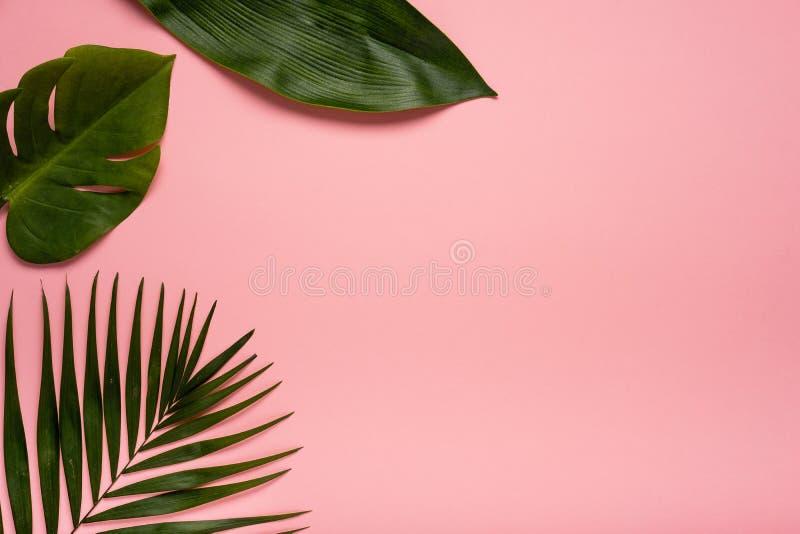 Hojas Tropicales Del Verano De Moda En Fondo Rosado Color Brillante ...