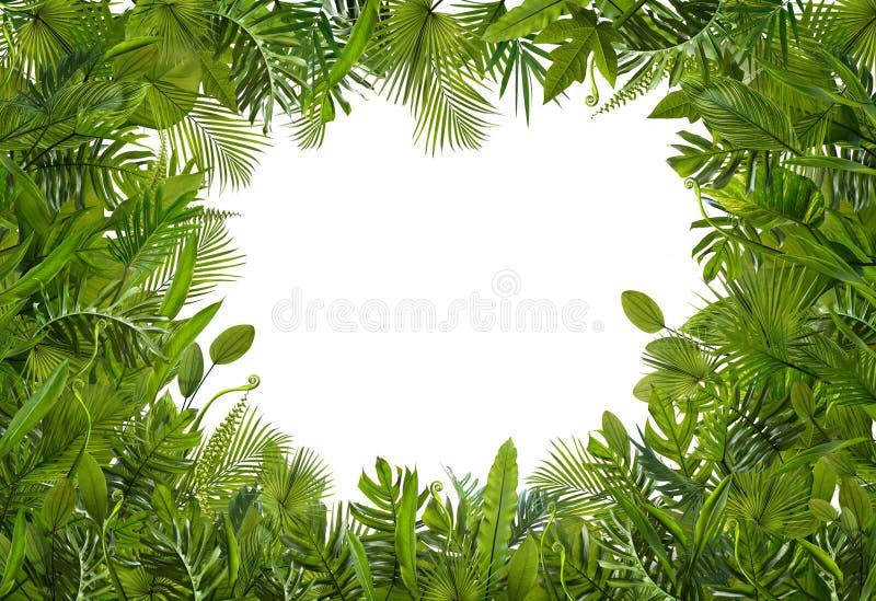 Hojas tropicales del verano para la bandera y el fondo foto de archivo