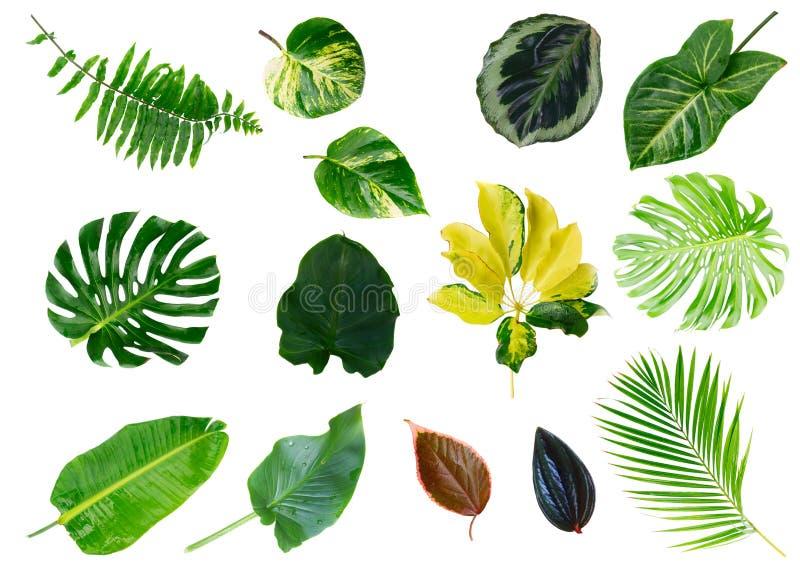 Hojas tropicales del verde fotografía de archivo libre de regalías