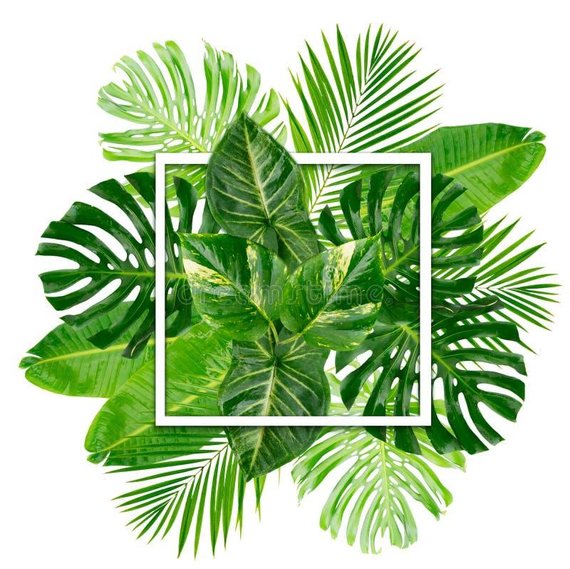 Hojas tropicales del verde imagenes de archivo