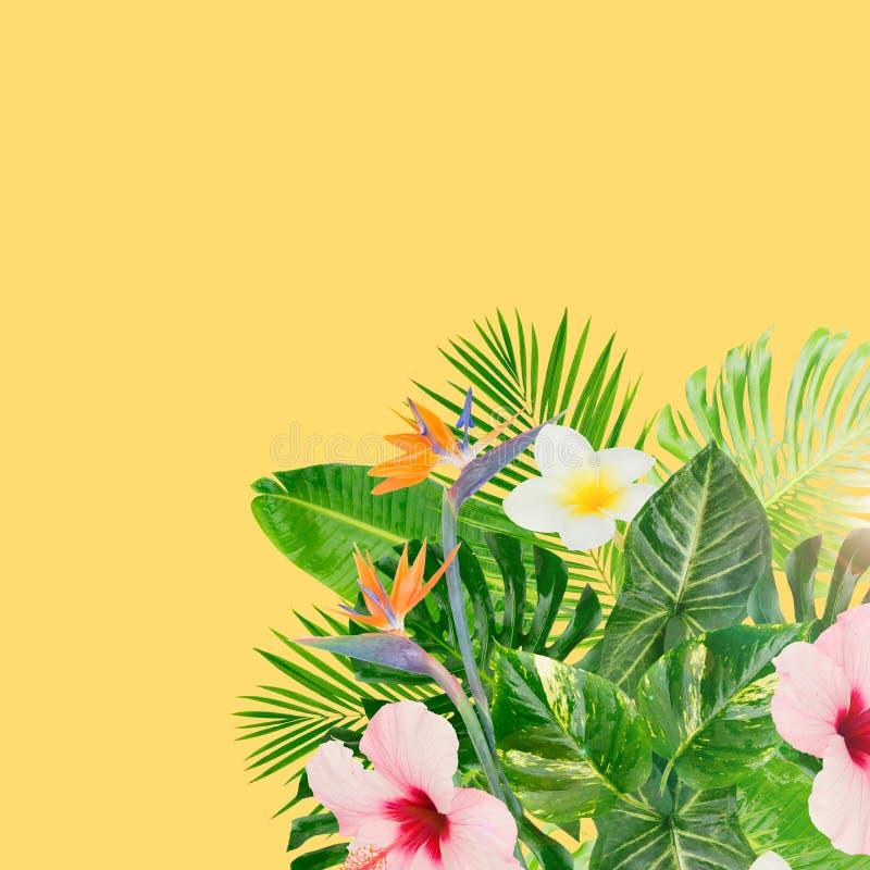 Hojas tropicales del verde stock de ilustración