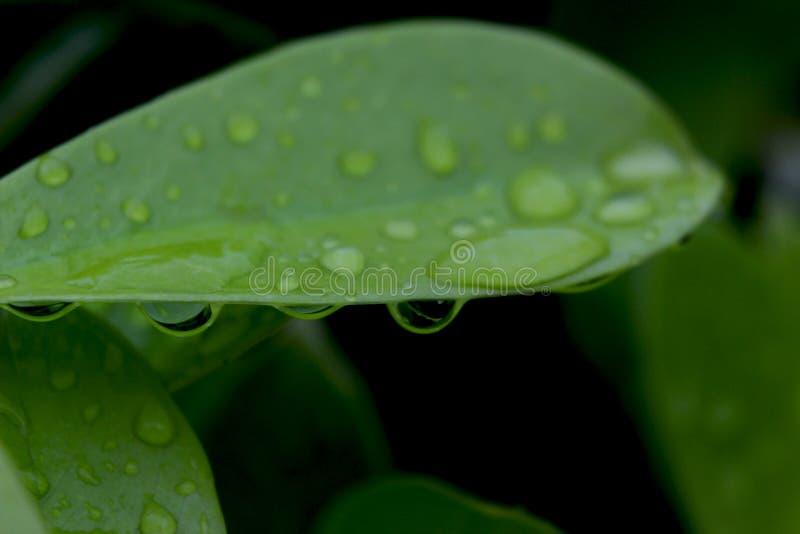 Hojas tropicales del verde imagen de archivo