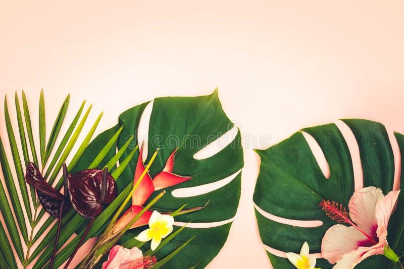 Hojas tropicales del verde imágenes de archivo libres de regalías