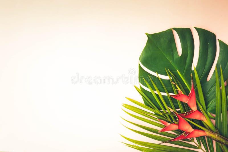 Hojas tropicales del verde imagen de archivo libre de regalías