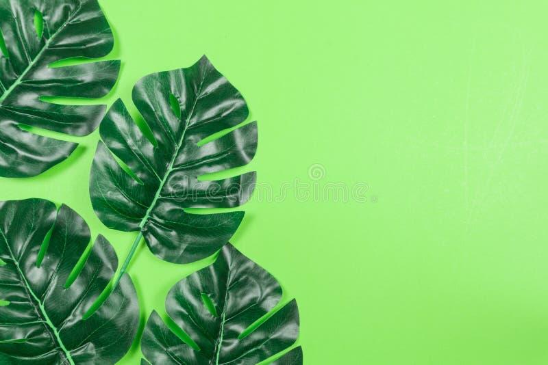 Hojas tropicales Monstera en fondo verde en colores pastel Endecha plana, visi?n superior foto de archivo