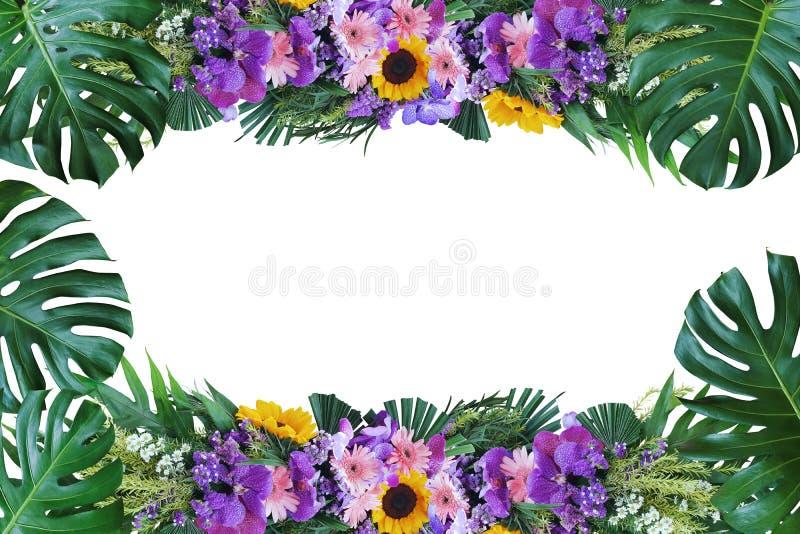 Hojas tropicales Monstera, helecho y palma de señora con la disposición colorida del marco de la naturaleza del arreglo floral de imágenes de archivo libres de regalías