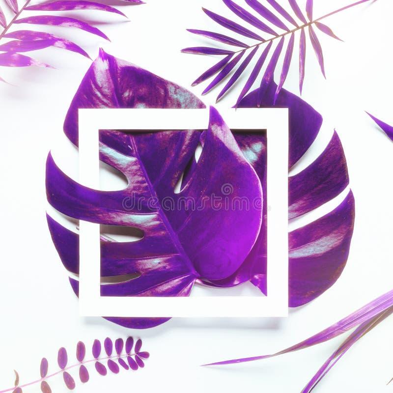 Hojas tropicales Monstera y palma en colores olográficos de la pendiente intrépida vibrante Arte del concepto Surrealismo mínimo imagen de archivo