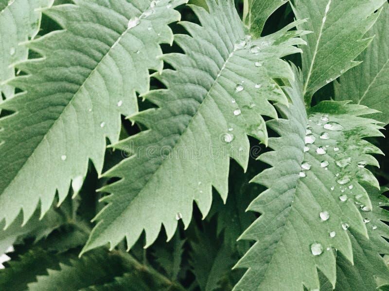 Hojas tropicales verdes imagen de archivo libre de regalías