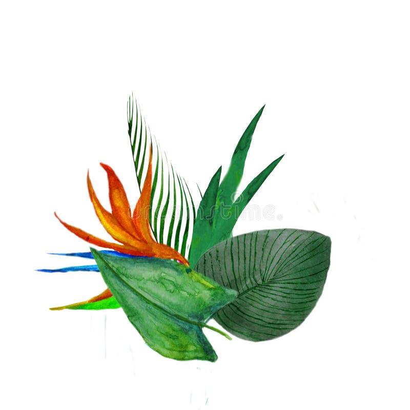 Hojas tropicales y flores del ramo de la acuarela aisladas en el fondo blanco ilustración del vector