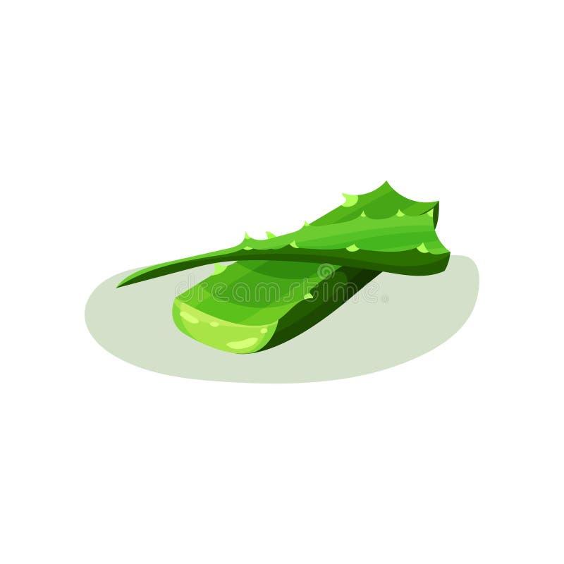 Hojas verdes claras del áloe Vera Planta suculenta usada en cosmetología y farmacia Elemento plano del vector para el cosmético libre illustration